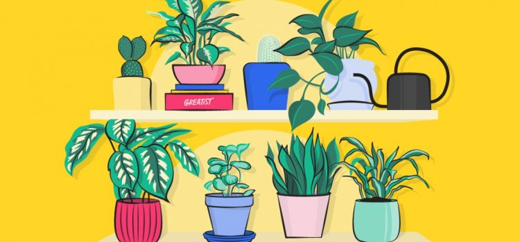 Best indoor plants for oxygen amid covid 19